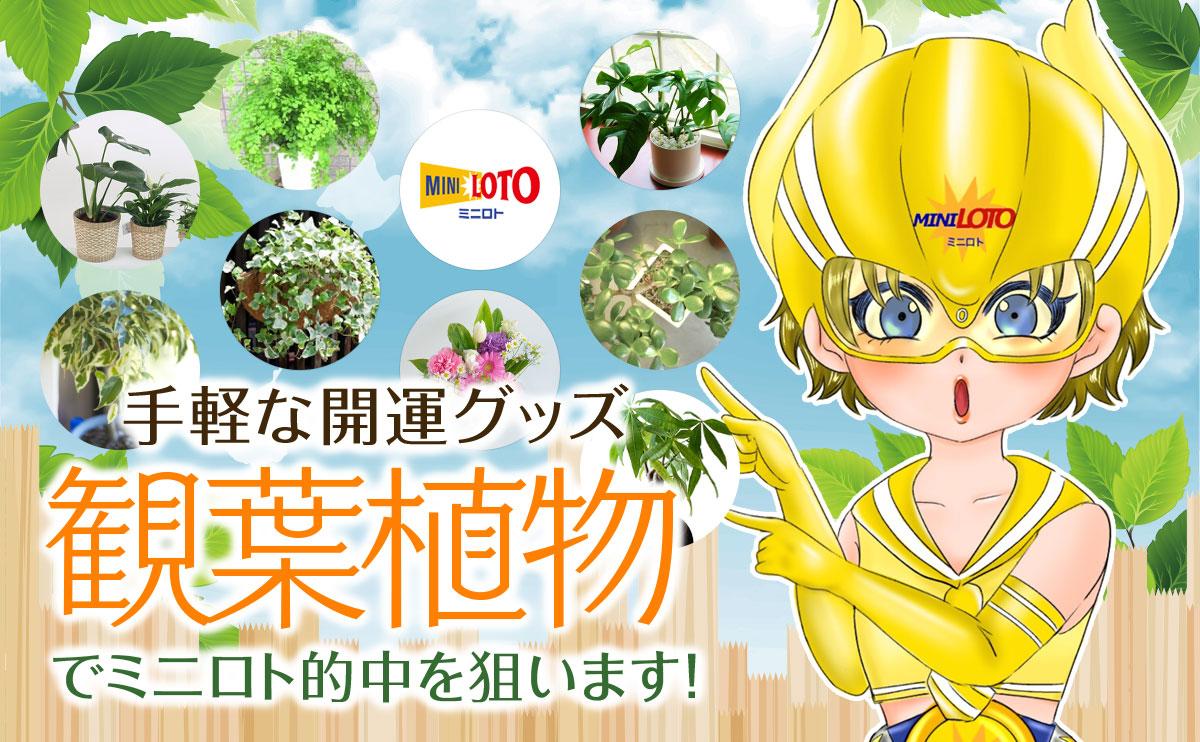 手軽な開運グッズ「観葉植物」でミニロト的中を狙います!